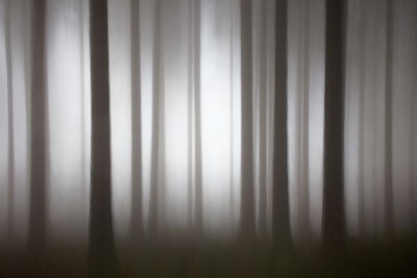 A Woodland Dream