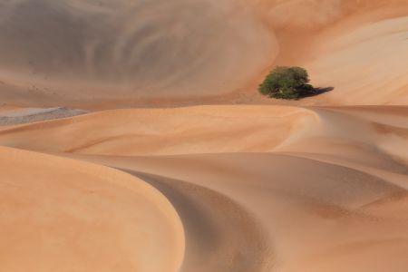 Abu_Dhabi_Liwa_002.jpg