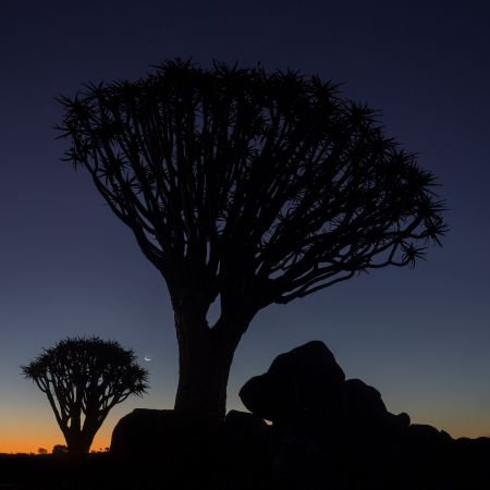 Namibia_Quiver_Tree_Forest_003.jpg