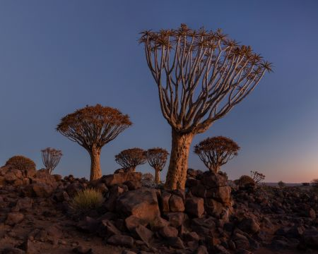 Namibia_Quiver_Tree_Forest_004.jpg