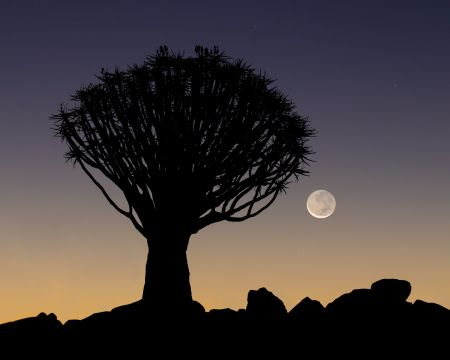 Namibia_Quiver_Tree_Forest_005.jpg